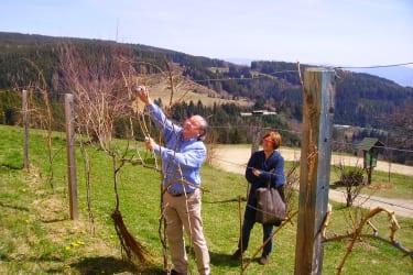 Weinbauversuch (