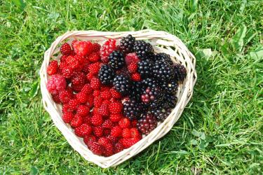 Beeren aus unserem Naschgarten