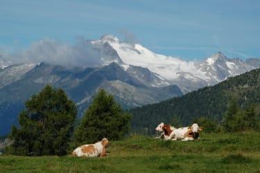 Von der Sonnalmhütte hat man eine herrliche Aussicht auf die Berge.