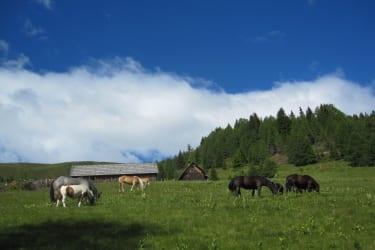 Pferde auf der Hoferalm