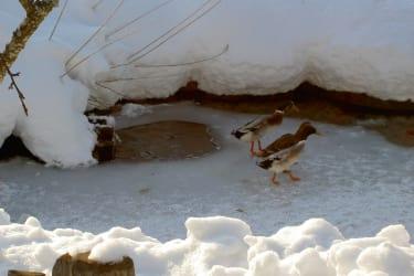 Eisplatz für die Enten