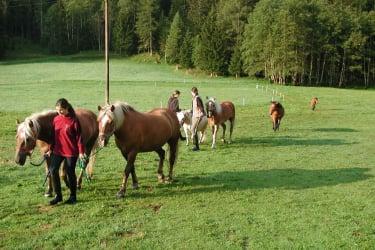 Pferde am Hof