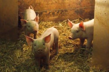 schwein gehabt ;)