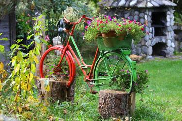 Blumenvielfalt im Sommer