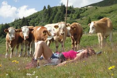 auf der Alm beim Vieh