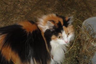 unsere Katze emely