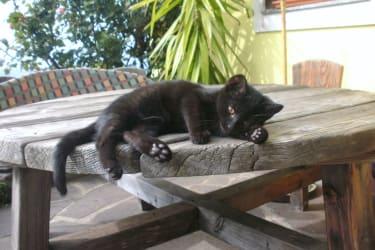 kleine Kätzchen...