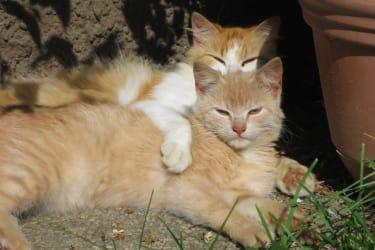 die Katzen genießen die Sonne