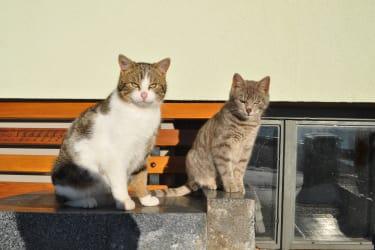 Unsere Katzen Peter und Horsti freuen sich immer auf die Streicheleinheiten unserer Gäste