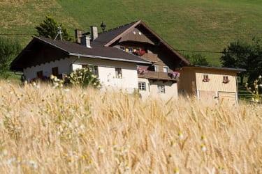 der Hof im Kornfeld