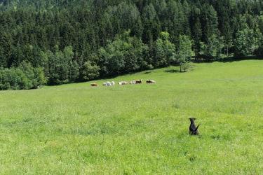 Sind das Kühe?