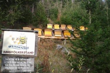 Bienenvölker Weissensee