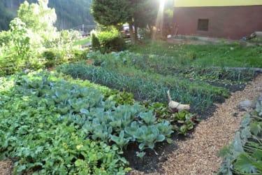 Reichhaltiger Bio Bauerngarten