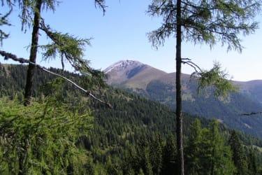 Rosennock im Nationalpark Nockberge
