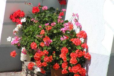 Blumen rund um dem Hof