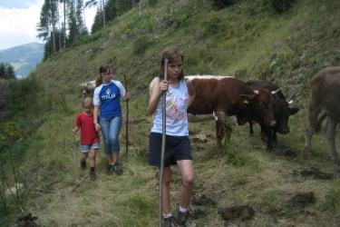 Kleine Rinderhirten