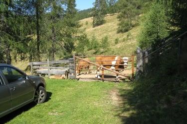 Parkmöglichkeit vor der Hütte - getrennt vom Weidevieh...