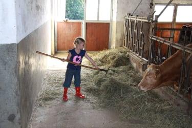 Beim Kühe füttern