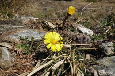 Tengghof- Frühlingserwachen