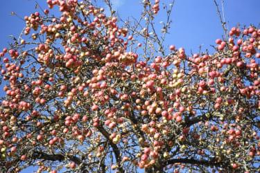 tengghof-Herbst
