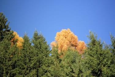 Tengghof-Herbststimmung