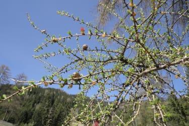 Tengghof - Frühlingserwachen
