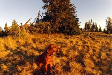 Sindy genießt den Sonnenuntergang am Kolmnock