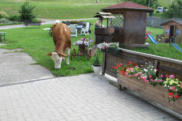 Kuh vorm Haus