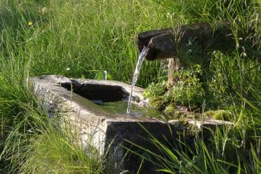 Frisches Quellwasser vom Brunnen