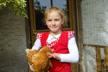 Auch Hühner kann man streicheln - wenn man kann