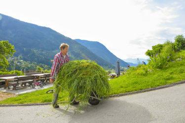 Frisches Gras für die Mutterkühe