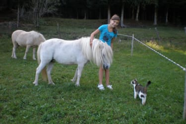 Ponys auf der Weide