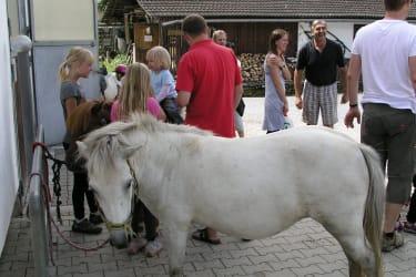 Ponys putzen und satteln
