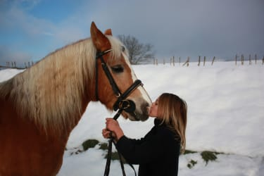 Pferdekuss im Schnee