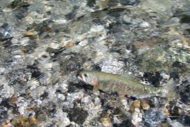 Fischen in der Trögerner Klamm