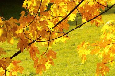 ..goldener Herbst..