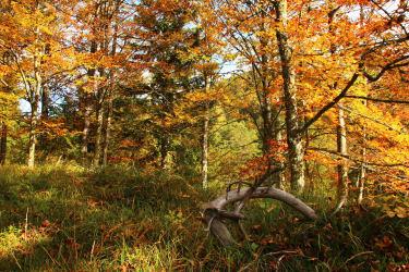 ..Herbstfarben...
