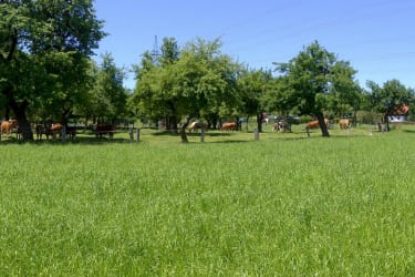 Rundumblick in unserem Obstgarten