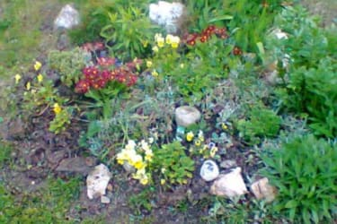 Steingarten Kräuter-Blumen