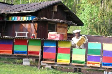 Bienen Peter