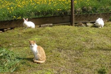 Zwergkaninchen mit Katze