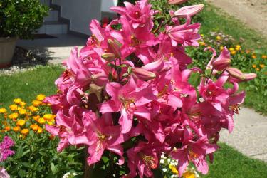 Blumenpracht Sommer