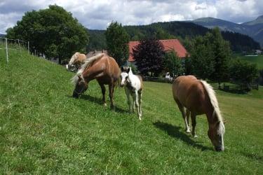 Pferde rund ums Haus