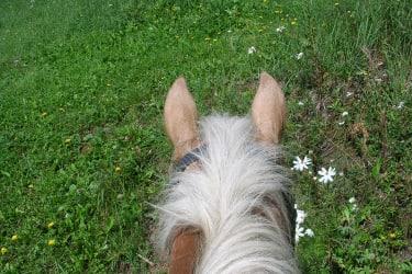 Aus der Sicht des Reiters