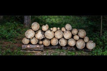 Erkunde die Umgebung - Wald