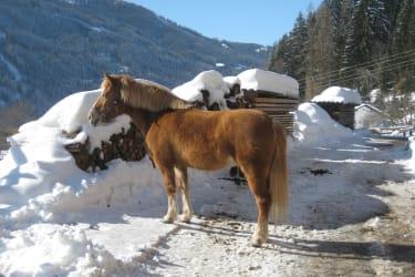 Pferd Flora