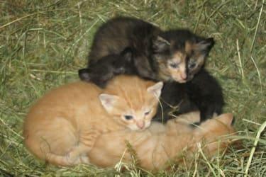Kätzchen zum Knuddeln