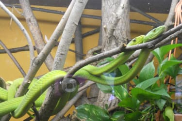 Ausflugsziel: Reptilienzoo Nockalm