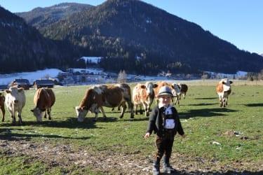 Elias mit unseren Kühen