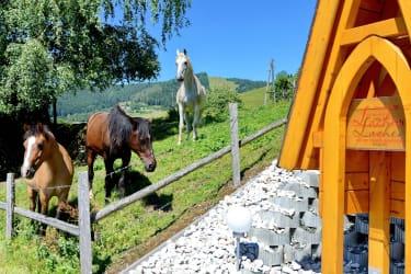Pferde zum Liebhaben
